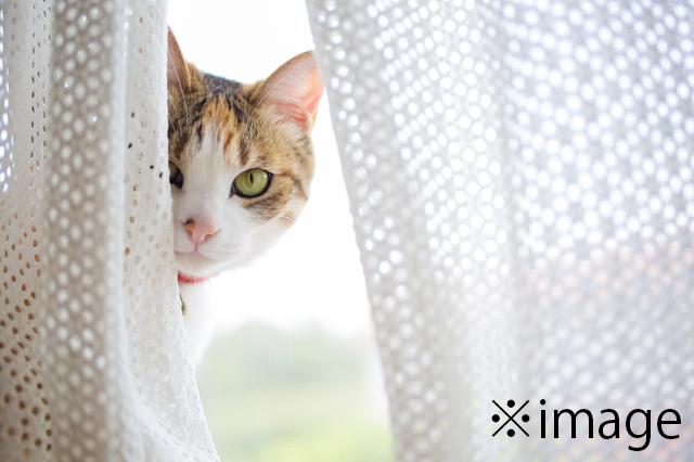 猫 カーテン イメージ